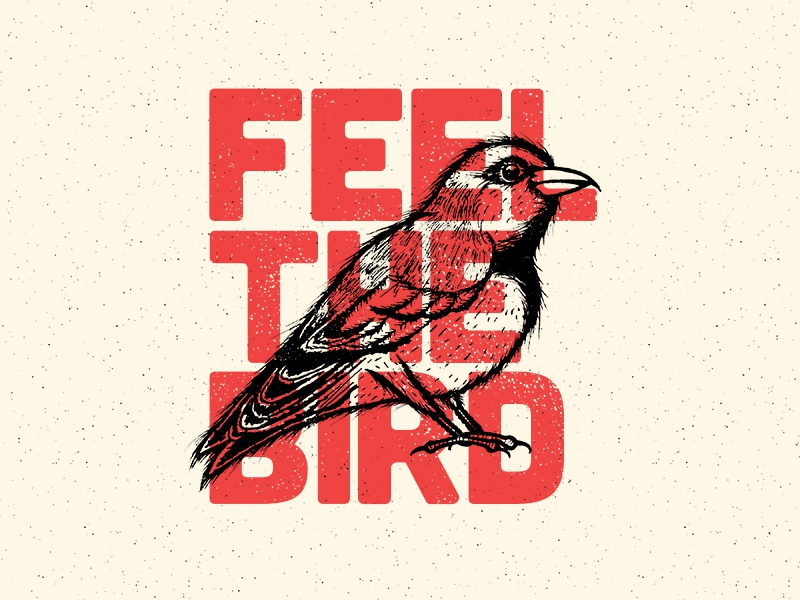 Feel The Bird handdrawn design typography type draw illustration bird birdiesanders