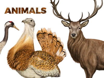 Vector illustration of various animals nature chinchilla bird wildlife animals logo creative market animals crane partridge deer