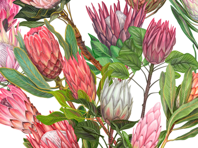 Love blossom with protea flowers
