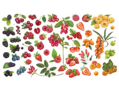 Rainbow berries