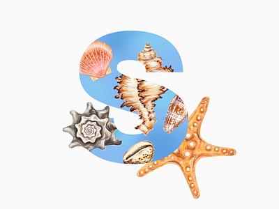 Sea Letter exotic texture seashell animals coral variety marine aquatic many summer collection shell tropical seashell sea