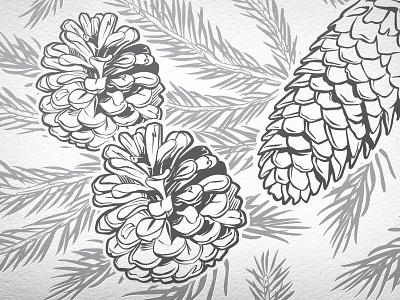 Pine Cones Vector Illustration pine cone vector illustration detail gray silver
