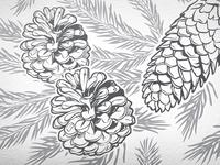 Pine Cones Vector Illustration
