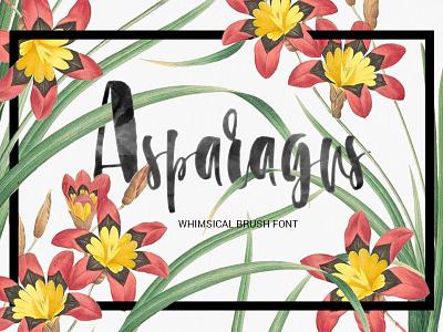 Asparagus - brush font brushfont calligraphic typography script brush font