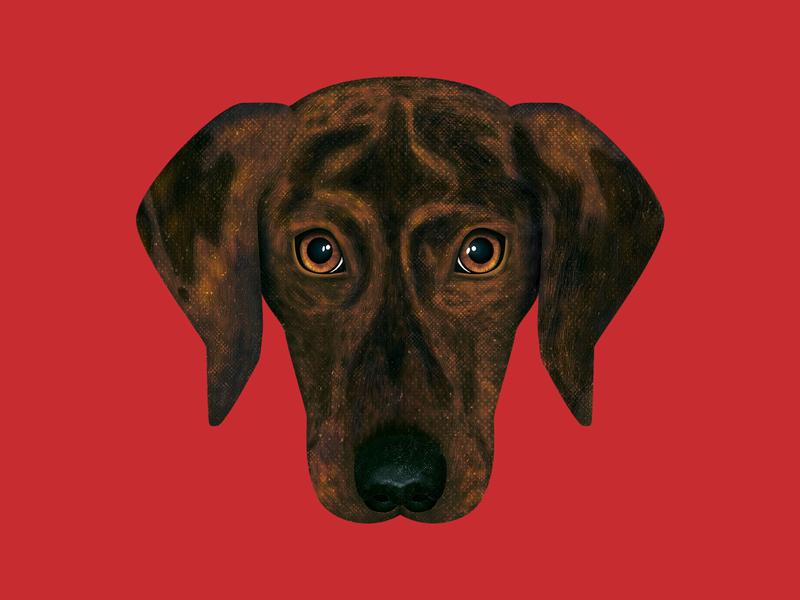 Captain true grit texture supply grit texture animal portrait dog portrait dog illustration adobe photoshop photoshop illustration illustrator dog
