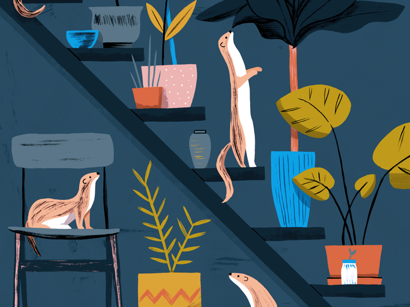 Weasel Houseplant Care icon pet weasel architecture animals plants interior painting art texture editorial drawing illustration