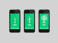 Elm Tree Growth