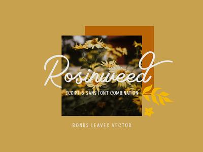 Rosinweed Font