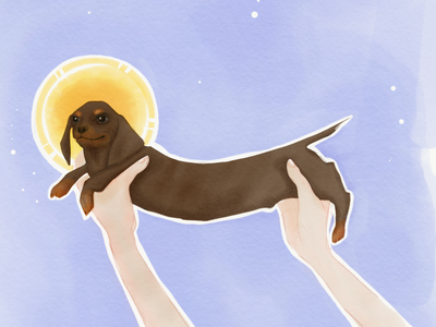 The Longest Boy suchbeauty weinerdog digital watercolour dog adobesketch applepencil illlustration