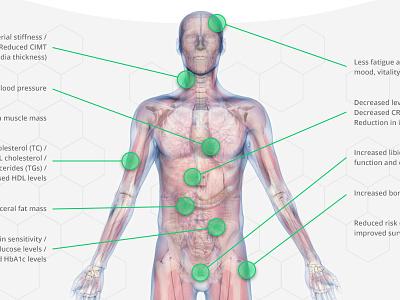 3D body diagram anatomy medical 3d modelling body 3d