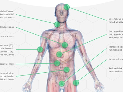 3D body diagram anatomy medical 3d modelling body 3d