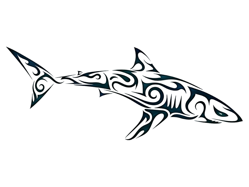 Tribal Shark 2 By Valentin Fran 231 Ois Dribbble Dribbble
