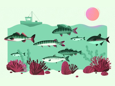 Baltic sea summer ocean fishing ship underwater sea fish