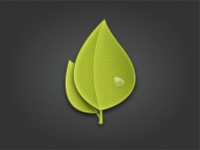 Leaves leaves leaf green water droplet