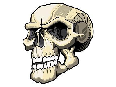 Dtc vectors skulls