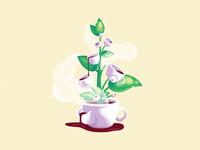 How does coffee grow
