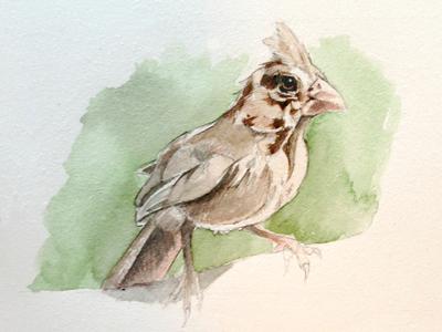 Study: Cardinal