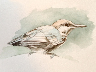 Study: Brown-Headed Nuthatch