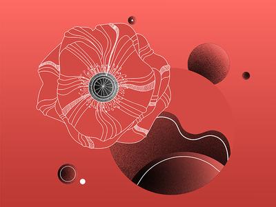 Poppy's world botanic geometric pink vector floral illustrator grain red vegetation flower poppy