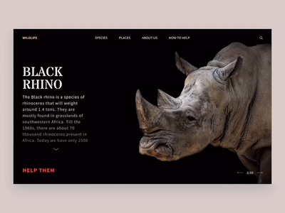 World Wildlife Fund | Non profit figma prototype user experience ui concept macaw tiger rhino desctop rare species animals worldwild wwf animation motion