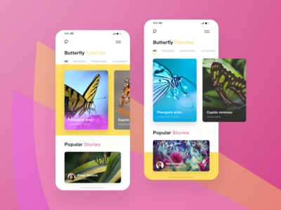 Butterflies App _ Home versions mobile pink yellow butterflies app butterflies butterfly experience design clean user-interface user-experience app homepage wireframe ui ux