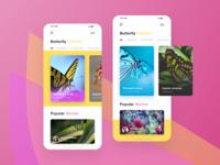 Butterflies App _ Home versions