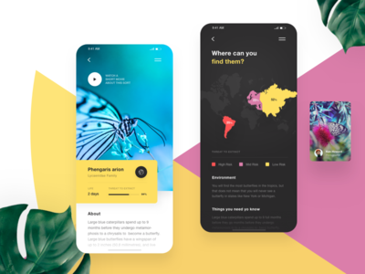 Butterflies App _ About butterfly icon typography vector illustration interface experience design clean user-interface user-experience app wireframe ui ux