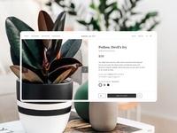 Ansel & Ivy typogaphy grid system grid interaction uiux ui shop shopping plants modern minimal website design website design app design app