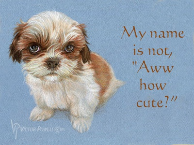Shih Tzu My Name Is Not Aww How Cute By Victor Powell