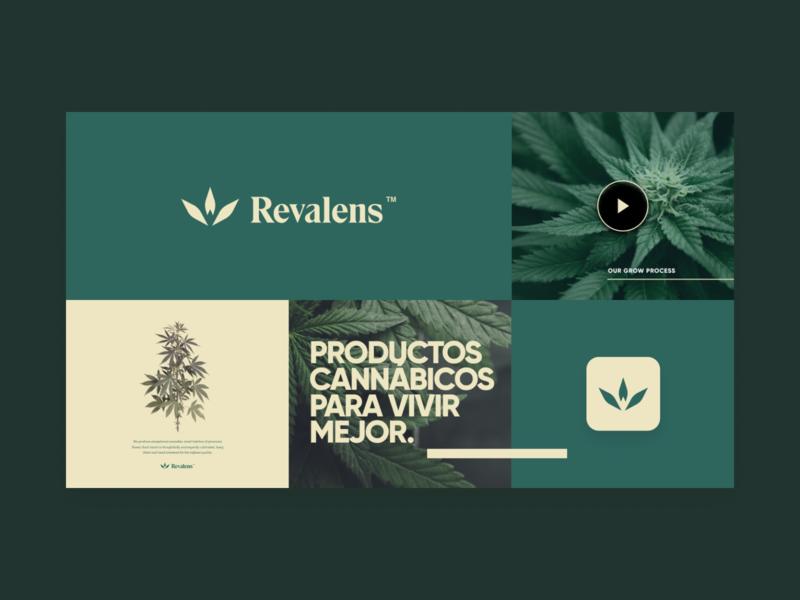 Revalens Brand natural yellows plants marihuana green brand branding cannabis branding logo cannabis