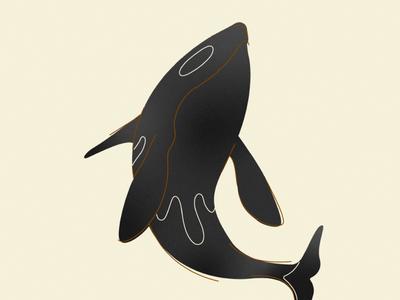Orca Whale line stroke minimal orca design illustration whale