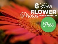 8 Free Flower Photos
