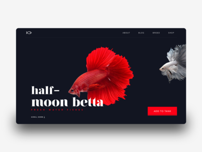 Landing page Interaction for web