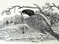 Thomas Bewick Letterpress Print