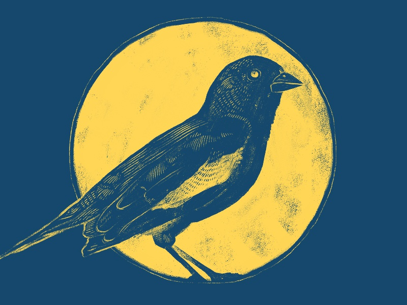 Lark Bunting bird lark drawing photoshop illustration