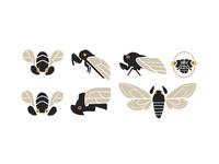 Cicadas 2 procreate dribbble