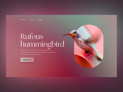 Humming Bird Site animal species humming bird bird after effect aftereffects product design website animation product uxui 3d layout visual design ui