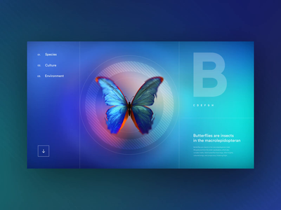 Butterfly Handbook - Concept butterflies butterfly after effects aftereffects website animation product uxui 3d layout visual concept design ui