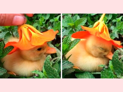 Little Duck character colorful smile friendly happy cute brand branding inspiration flower leaf outline animal lover hat duck cartoon logo