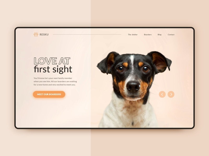 Daily UI - 03 | Landing Page orange rescue animal shelter animal shelter dog websesign website landingpage interface daily 100 challenge dailyui 003 dailyuichallenge dailyui uidesign ui