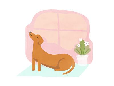 Doga cute pet yoga daschund sausage-dog illustration dog