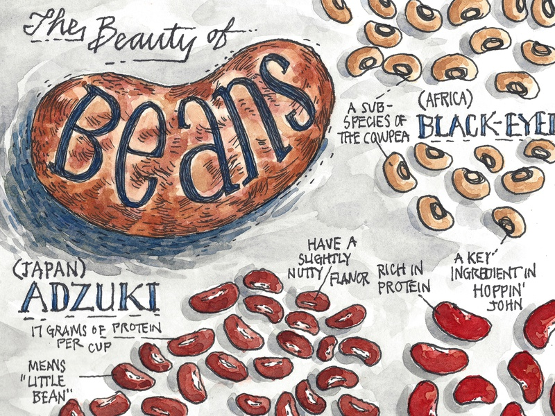 The Beauty of Beans