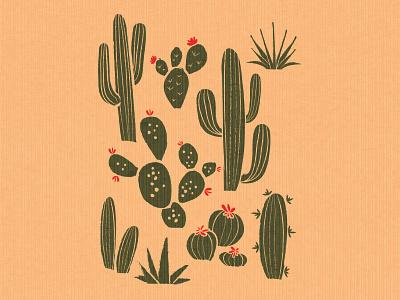 cactus cactus illustration nature plants prickly pear plant west desert cactus