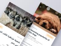 Arabic vs English in Design page design arabic type ltr rtl dog article arabic font arabic ux app ui flat clean ios