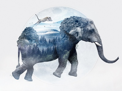 Elephant photography lightroom art direction design photoshop retouch double exposure