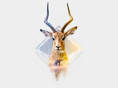 Impala art direction animals impala retouch photoshop hyena double exposure
