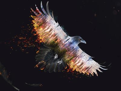 Burning Raven photoshop retouch fire forest double exposure raven