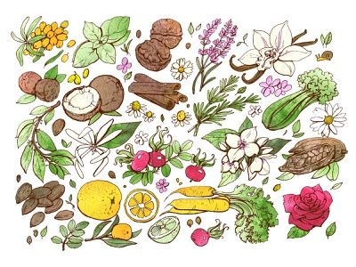 Pattern graphic green berries nutshell plants watercolor drawing illustration