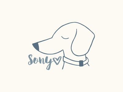 Sony the Doxie