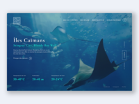 Concept - Club de plongée international 2/3